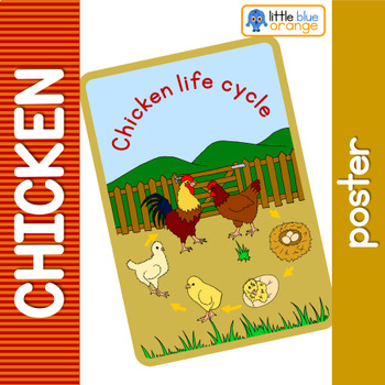 Chicken life cycle poster