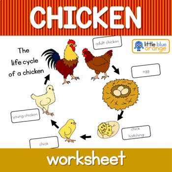 Chicken life cycle worksheet by Little Blue Orange | TpT
