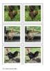 Chicken matching cards