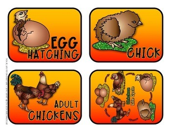 Chickens {Fun & facts about chickens & other domestic poultry!}