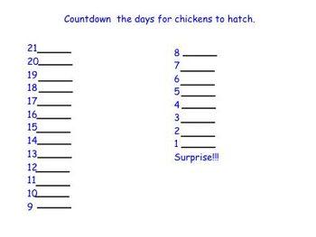 Chickens hatching!