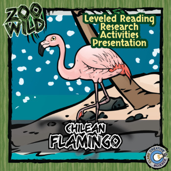 Chilean Flamingo -- 10 Resources -- Coloring Pages, Reading & Activities