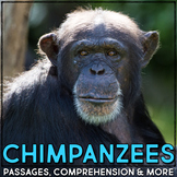 Chimpanzee: Informational Article, QR Code Research & Fact Sort
