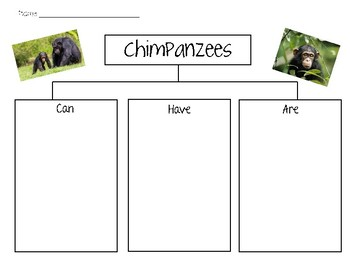 Chimpanzee can/have/are Chart