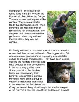 Chimpanzees, Bonobos, and Bili Apes