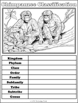 Chimpanzees Notebooking Pages
