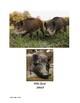 China Animals Stations/ Estaciones de animales de China