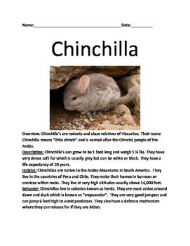 Chinchilla - rodent review article lesson information facts questions vocab