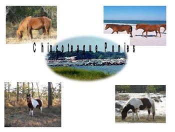 Chincoteague Pony Power Point
