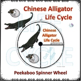 Reptile: Chinese Alligator (Life Cycle Spinner)