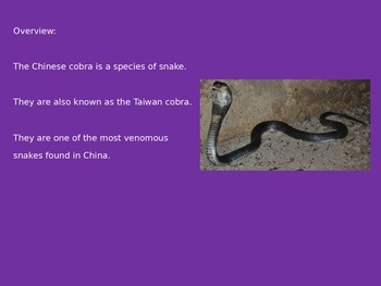 Chinese Cobra - Power Point - Pictures Facts Information Review