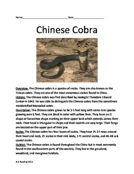 Chinese Cobra - Snake - Informational Review Article Facts