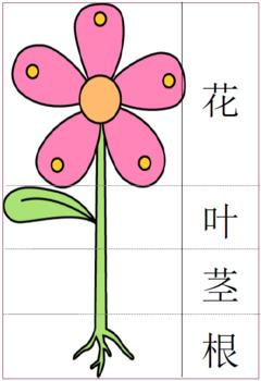 Chinese Gardening Theme Packet for Children