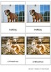 Chinese New Year 2018 - Dog Breeds 3-part cards