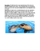 Chinese River Dolphin - Lesson review article facts information questions vocab