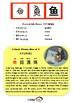 Chinesee Flashcard_鱼_Fish
