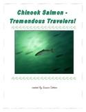 Chinook Salmon - Tremendous Travelers!