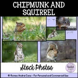Chipmunk and Squirrel Stock Photos - Personal and Commercial Use