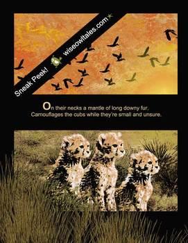 Chitraka- A Challenged Cheetah Tale