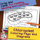 Chloroplast Diagram Coloring Page and Reading Page