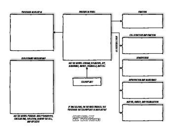 Chloroplast Graphic Organizer