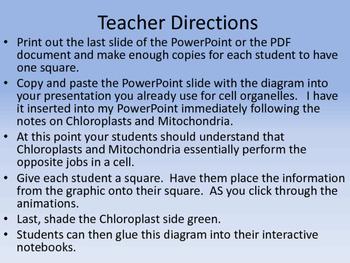 Chloroplast & Mitochondira Graphic & Printable for ISN
