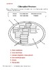 Chloroplast and Mitochondrion Diagram WS