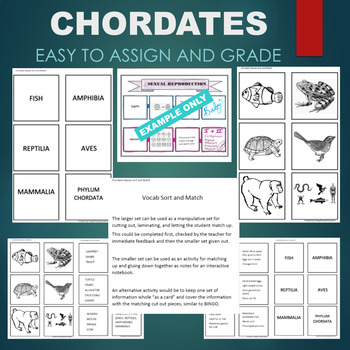 Chordate Classes (Vertebrates- Bird, Mammal, Reptile, etc) Sort & Match Activity