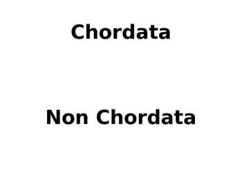 Chordata Non Chordata