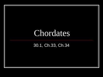 Chordate PowerPoint