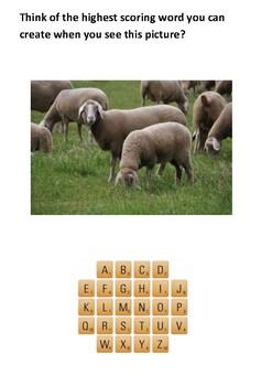 Chris the Merino sheep Handout