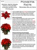 Christmas Activities: Poinsettia Facts Christmas Activity Packet