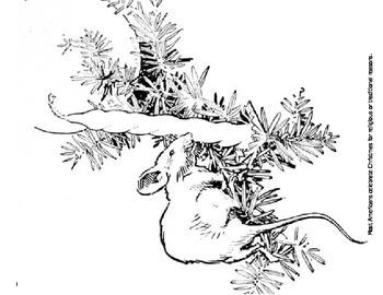Christmas, Hanukkah, Kwanzaa, and More