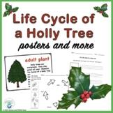 Christmas: Holly Tree Life Cycle