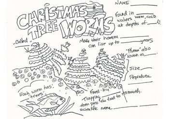Christmastree Worm