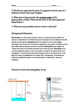 Chromatography/Photosynthesis Lab