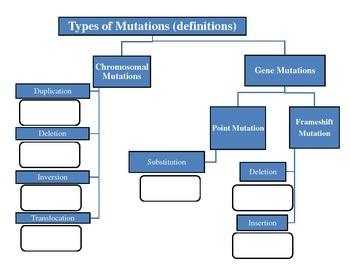 Chromosomal and Gene Mutations Flowchart