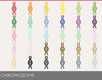 Chromosome Digital Clipart, Chromosome Graphics, Chromosome PNG