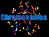 Chromosome Notes and Review Worksheet