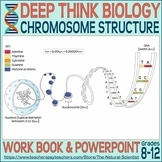 Chromosome Structure - Deep Think Biology Lesson 3