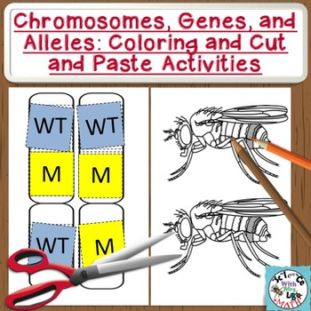 Chromosomes, Genes, and Alleles Cut and Paste Coloring Activity