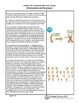 Chromosomes and Karyotypes Annotated Video Script TEMPLATE- Amoeba Sisters