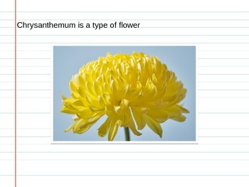 Chrysanthemum PowerPoint