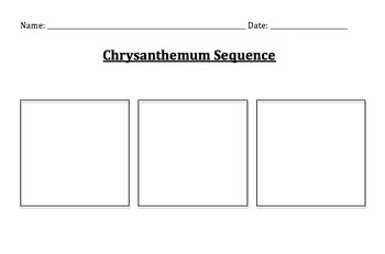 Chrysanthemum Sequencing