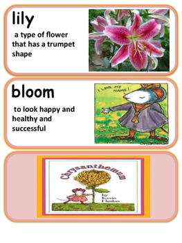 Chrysanthemum Vocabulary with definitions