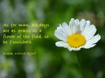 Church Set - Psalm 103:15