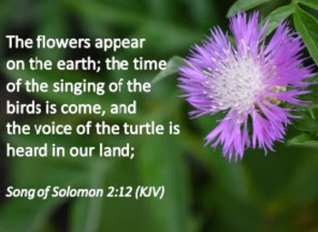 Church Set - Song of Solomon 2:12 (KJV)  With Bee Balm Fro