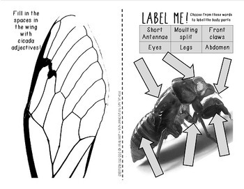 Cicada Celebration!  {An activity booklet about the cicada life cycle}
