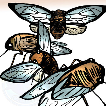 Cicada Insect Clip-Art- 8 Pieces BW and Color!