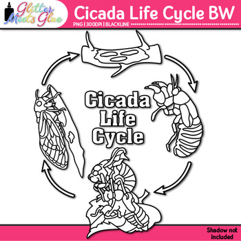 Cicada Life Cycle Clip Art {Great for Animal Groups, Insect Resources} B&W